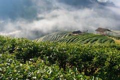 茶园在北泰国 免版税库存照片