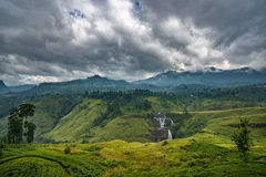 茶园在山区在努沃勒埃利耶,斯里兰卡 库存图片