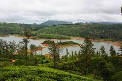 茶园在斯里兰卡, Nowember 2011年 免版税库存图片