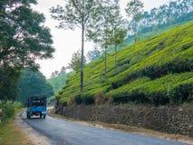 茶园在Munnar喀拉拉,印度 免版税库存照片