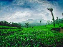 茶园在Nelliyampathi 免版税库存图片