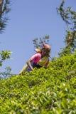 茶园在Nuwara,斯里兰卡 免版税库存图片