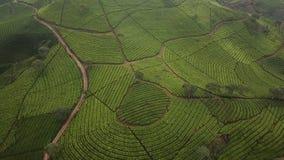 茶园惊人的空中风景  影视素材