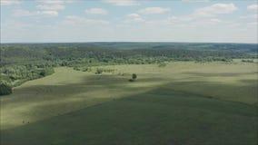 茶园木平台风景视图有天空蔚蓝的在早晨 与庄稼的绿色领域 股票录像