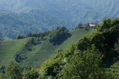 茶园,里泽,土耳其 图库摄影