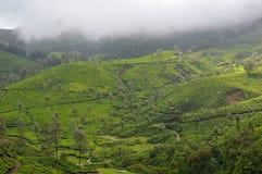 茶园, Munnar,喀拉拉,南印度 库存图片