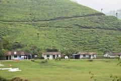 茶园, Munnar,喀拉拉 免版税库存图片