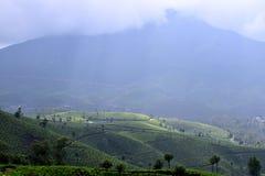 茶园, Munnar 免版税库存照片