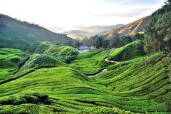 茶园, Sungai Palas,金马仑高原 图库摄影