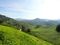 茶园Brinchang金马仑高原马来西亚 免版税图库摄影