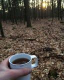 茶在森林 免版税库存照片