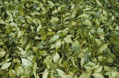 茶堆 免版税图库摄影