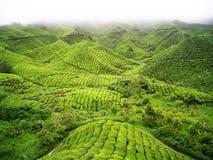 绿茶山 免版税库存图片
