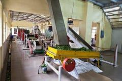 茶工厂,印度 免版税库存图片