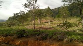 茶庄园在山区 免版税库存图片