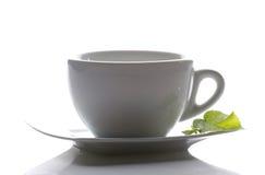 茶杯和一片造币厂的叶子 库存图片