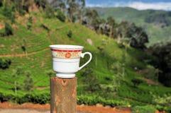 茶杯种植园自然风景在斯里兰卡 免版税库存图片