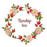 茶标签或卡片,传染媒介例证的野玫瑰果框架 皇族释放例证