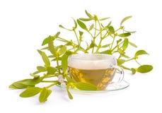 茶槲寄生 库存图片