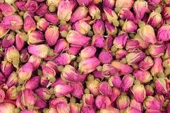 茶玫瑰花蕾 库存照片