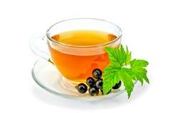 茶用在杯子的黑醋栗 库存图片