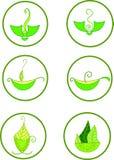 绿茶的例证 库存照片