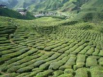 茶的庭院在卡梅伦高地 库存照片