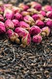 茶的玫瑰 库存图片