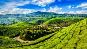 绿茶种植园在Munnar,喀拉拉,印度 免版税库存照片