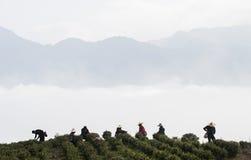 茶种植者 免版税库存照片
