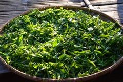 茶芽&叶子在竹篮子 免版税库存照片