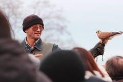 茶隼猎鹰训练术教训 免版税库存图片