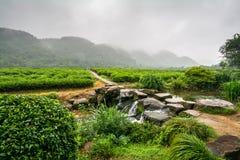 茶plantage在杭州,中国 免版税库存图片