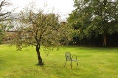 绿草、一棵树和一把椅子在公园-镇静松弛概念 库存照片