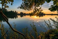 草、叶子和一棵树的树干在湖的边由落日美妙地照亮 免版税库存图片