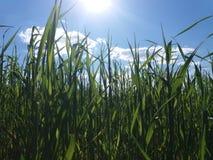 草、太阳和云彩 免版税库存图片
