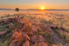 草、岩石和一棵树在日落 免版税图库摄影