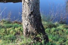 草、渠道和树 库存图片