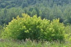 草、灌木和树 库存图片