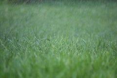草、雨和水滴 免版税图库摄影