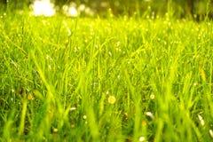 绿草、水下落和露珠在早晨 库存照片