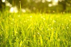 绿草、水下落和露珠在早晨 库存图片