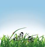 草、蝴蝶和瓢虫在蓝色背景 免版税库存图片