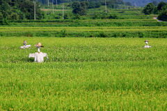 稻草人和农场 图库摄影