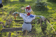 稻草人在一个菜园里在乡下 库存照片