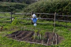 稻草人在一个菜园里 库存照片