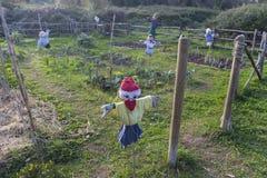 稻草人在一个菜园里 免版税库存图片
