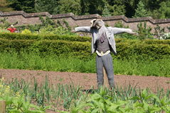 稻草人在一个菜园里 图库摄影