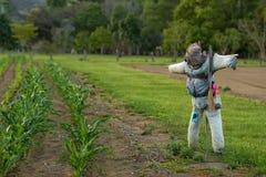 稻草人在澳大利亚 免版税图库摄影