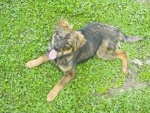 草位于的小狗 免版税库存照片
